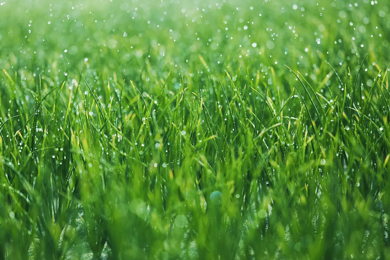 Lawn Care In Atwater
