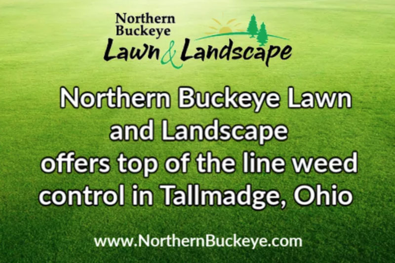 Weed Control in Tallmadge, Ohio