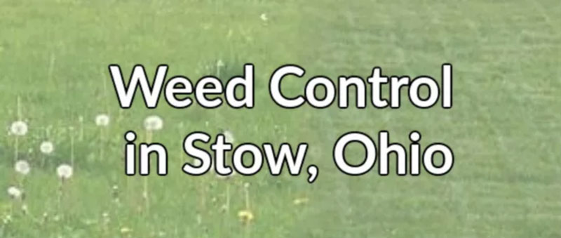 Professional Weed Control in Stow, Ohio
