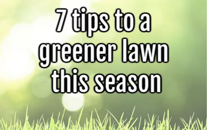 7 tips to a greener lawn this season